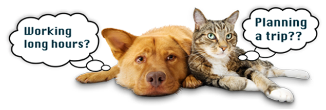 Premier In Home Pet Care Services Los Angeles Dog Walking Cat Sitting Hiking Bird Tailored Visits